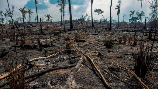 Brazil's government knew the Amazon was going to burn and did nothing