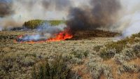 This new gel prevents plants from burning to stop wildfires