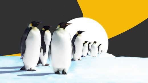 As the ice disappears, climate change is coming for the emperor penguin