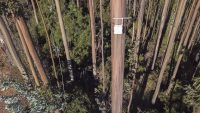 "These ""digital noses"" in trees sniff the air for forest fires"