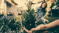 Princeton researchers discover that home gardening is basically the answer to society's ills