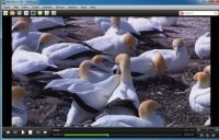 10 Best Video Players for Windows PC