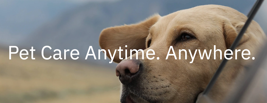 Airvet Showered by Investors with $14M in Series A Funding to Bring Virtual Care to Every Pet Owner in the Country | DeviceDaily.com