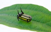 This tiny robotic beetle travels for two hours without a battery