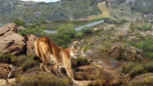 This massive wildlife crossing will help protect wildlife from LA drivers on the 101