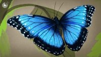 This paint inspired by butterflies could be the secret to cooler cities