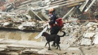 UPenn releases surprising report on 9/11 rescue dogs and their causes of death