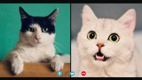 Still can't find that lawyer's viral cat filter for Zoom? Here's why