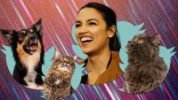Twitter trolls tried to come for AOC. Their hashtag got taken over by adorable pet pics