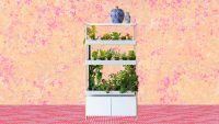 This indoor gardening system brought homegrown veggies (and zen) to my New York apartment