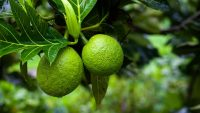 You've probably never eaten breadfruit. Here's why Patagonia wants to change that