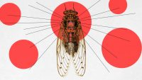 When are the Brood X cicadas coming? This map and tracker app will tell you