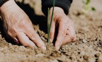 3 Ways Companies Can Be More Sustainable