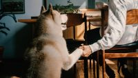 Returning to the office means separation anxiety for your pet: Here's how to help them cope