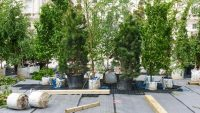 How to build an urban forest from scratch