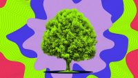 This radio station plays songs made by trees as they grow