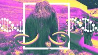 This startup really is trying to create living woolly mammoths from DNA